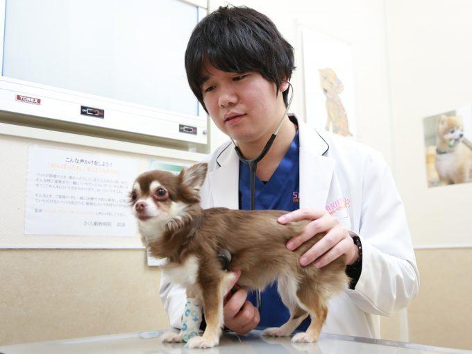 獣医師:和田智樹