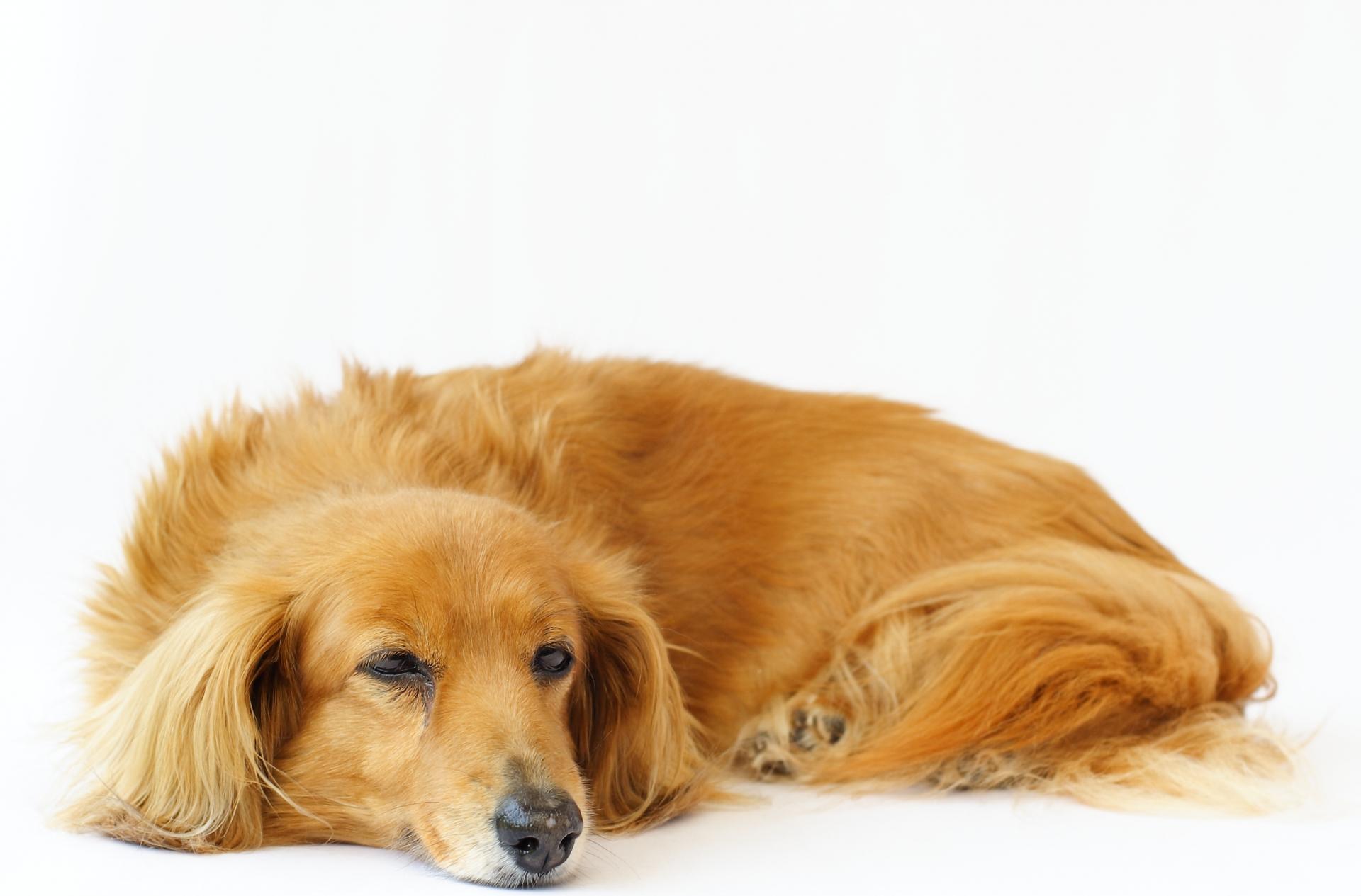 予防薬を飲む犬