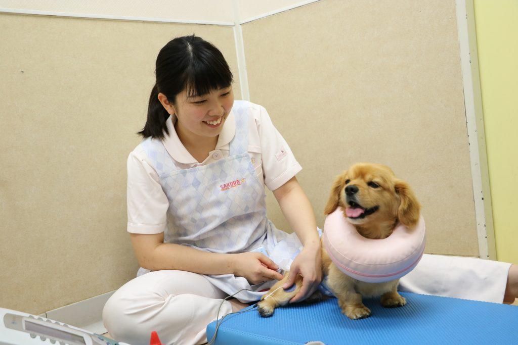 動物看護師の渥美さん