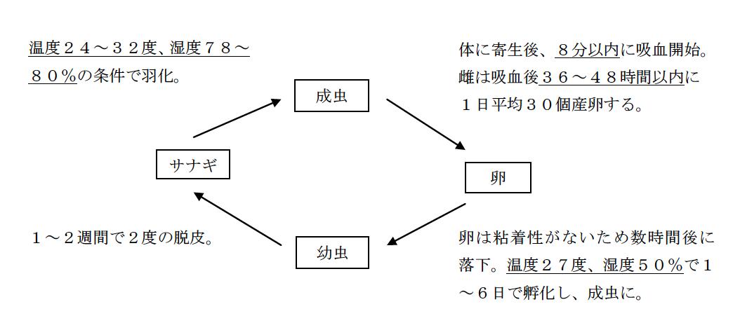 ノミの成長サイクル