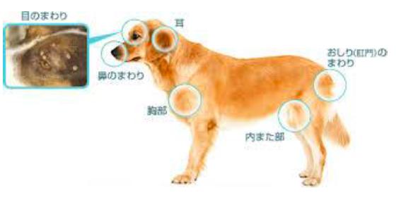 犬のノミがいやすいポイント