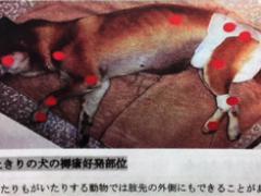 褥瘡(じょくそう)のできやすい部位